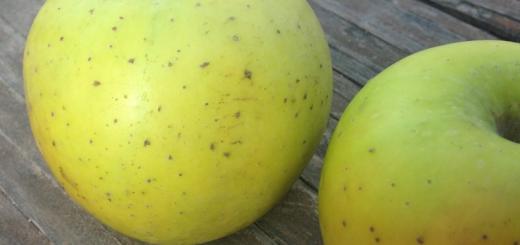 100 051 C jabuka