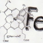 Željezo - metabolizam