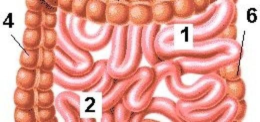 Crijevo