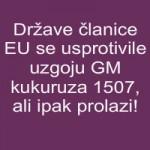 Države članice EU se usprotivile uzgoju GM kukuruza 1507, ali ipak prolazi!