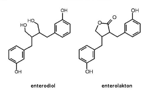 Enterodiol-enterolakton